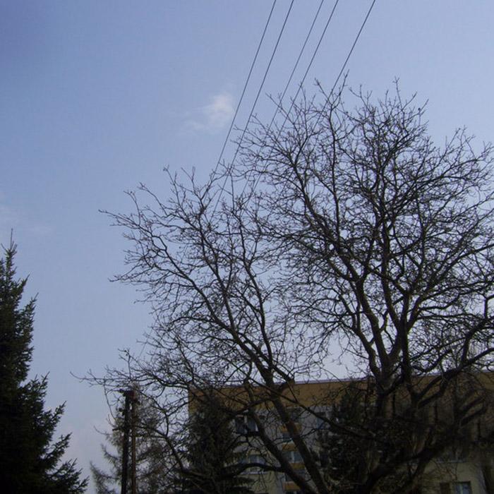 Freischneiden von Kabeln, Dächern und Fassaden